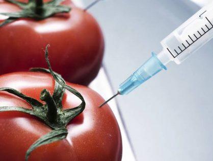 Хочу питаться генетически-модифицированными продуктами